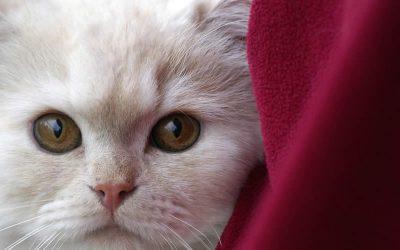 Rimuovere Peli Cane e Gatto in Lavatrice