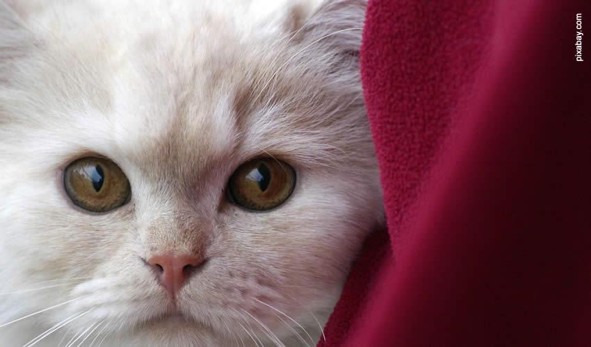 Rimuovere Peli Cane e Gatto in Lavatrice Cover